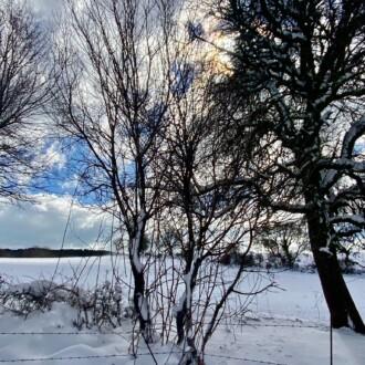 Neva a Mattinata, febbraio 2021. (Foto: Francesco Colletta)