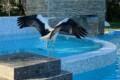La cicogna avvistata a Mattinata (Foto: Hotel Resort Torre Santamaria)